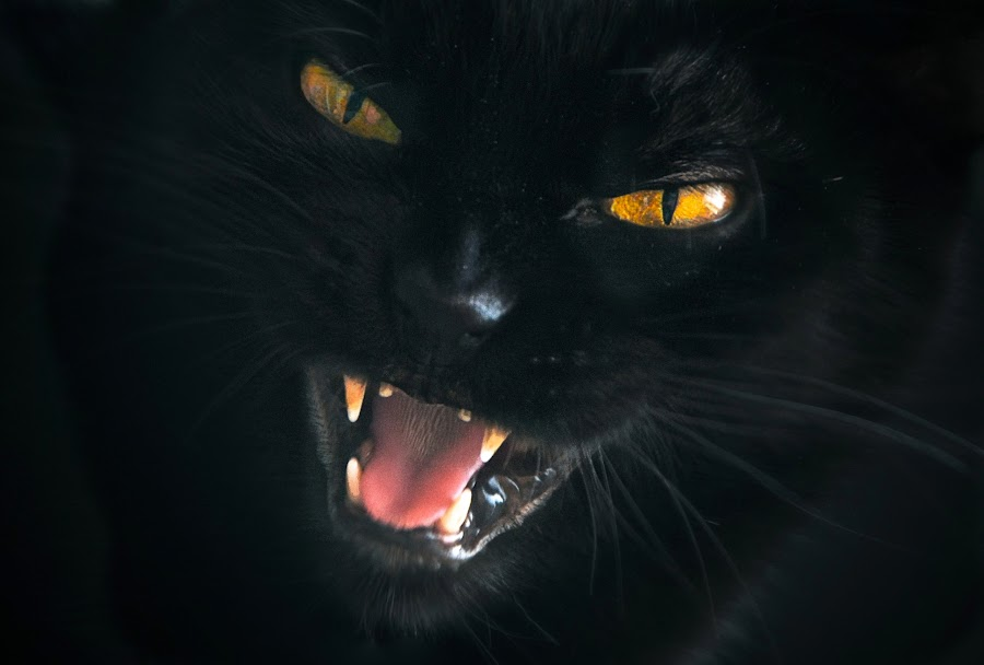 gara by Almasa Dalan - Animals - Cats Portraits