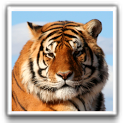 Tiger Wallpapers icon