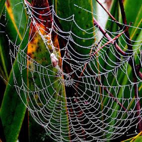 by Renata Kučan - Nature Up Close Webs