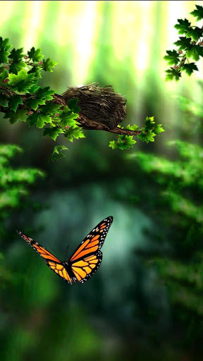 Image result for butterfly zen images