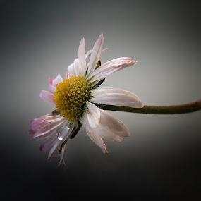 by Ivanka Ruter - Flowers Single Flower