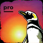 Bringtone Pro