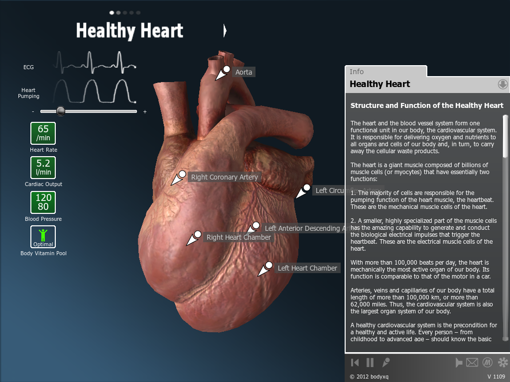 bodyxq heart - screenshot
