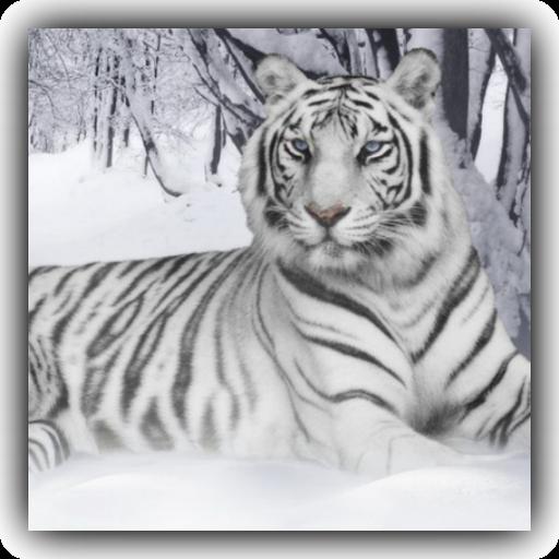 White Tiger Live Wallpaper 娛樂 App LOGO-APP試玩