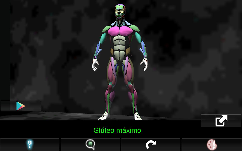 Software de anatomía muscular 3d para la enseñanza