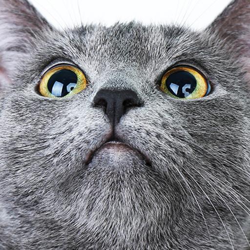 Free Cat Sounds App