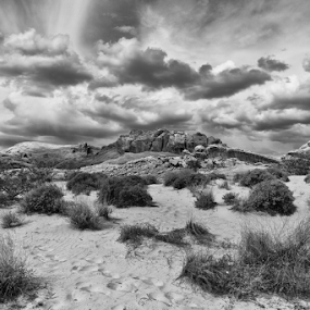 We belong to the earth by Lisa Kidd - Landscapes Cloud Formations ( clouds, desert, nevada, brush, valley of fire )
