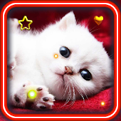 Valentine Kitties HD LWP
