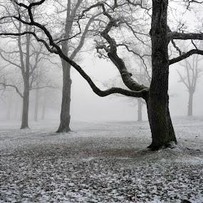 Arms Reaching by Randi Grace Nilsberg - Landscapes Weather ( foggy, fog, reaching, trees )