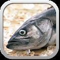 Download Рецепты из рыбы беспл. APK