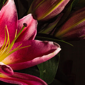 Imperfect Lily by Brian Miller - Flowers Flower Buds (  )