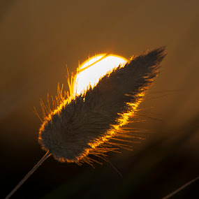 Trava by Sead Kazija - Nature Up Close Leaves & Grasses