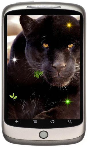 Wild Panther Photo 2015 LWP