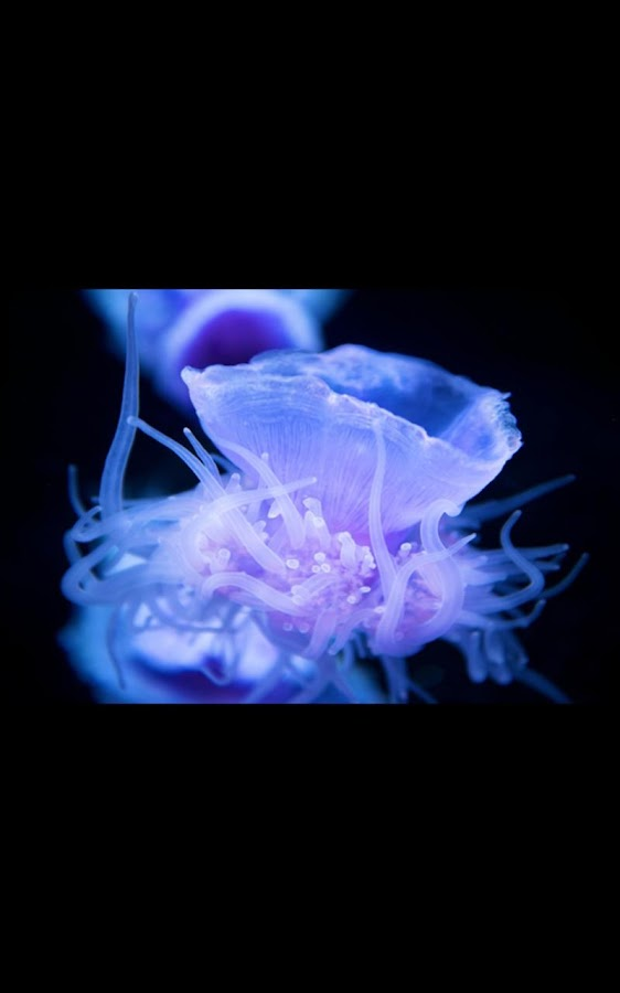 glow jellyfish live wallpaper android apps on google play