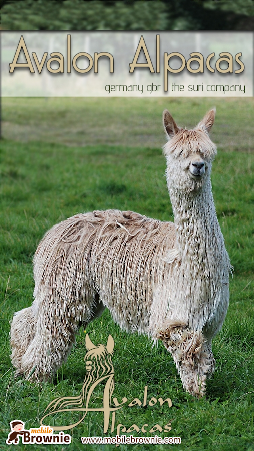 Avalon Alpacas- screenshot