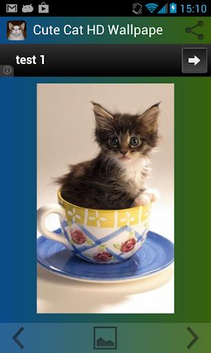 可愛的貓高清壁紙免費