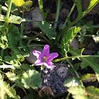 Flower tuleh