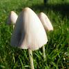 Cogumelo-Cone