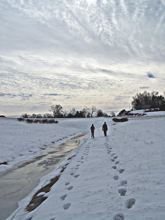 Wintry walk by Carrie Hoglen-Mulkey - Landscapes Weather