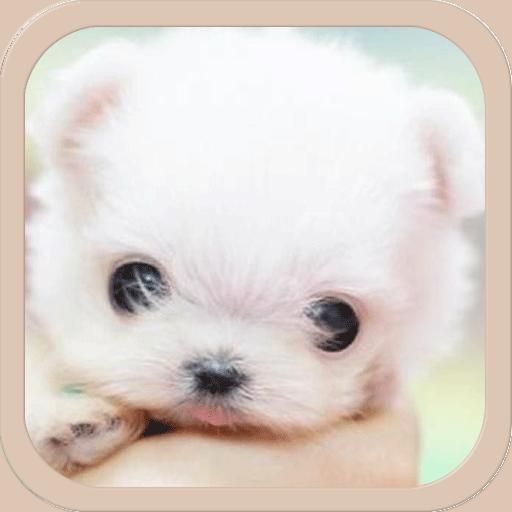 寵物鈴聲 LOGO-APP點子