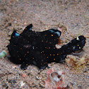 Clown Frog fish (Angler fish)