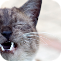 CatCare icon