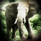 Elephant Sound Effects icon