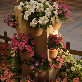 by Kaushik Nandy - Flowers Flower Arangements ( Flowers, Flower Arrangements )