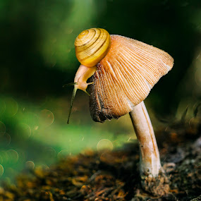 Romantic by Dragana Trajkovic - Nature Up Close Mushrooms & Fungi ( mushroom, fungi, nature, grass, green, yellow, bokeh,  )