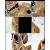 Dog's Sliding Puzzle