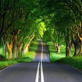 Long Road Live Wallpaper