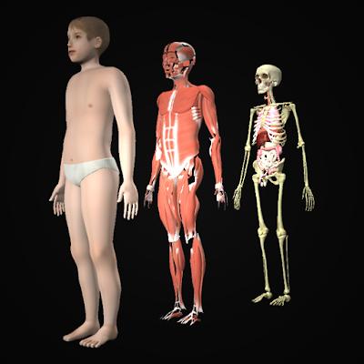Drill Down Child Anatomy
