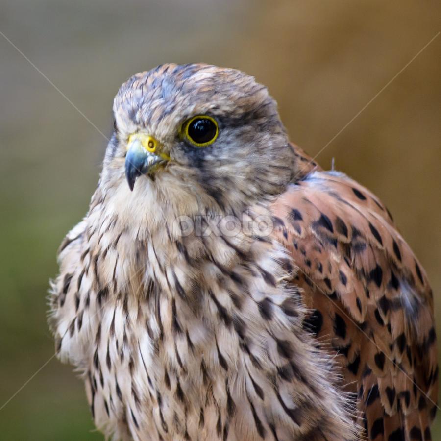 by Brás Monteiro - Animals Birds