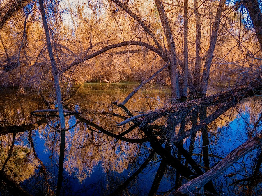 Cottonwood Lake by Karen Martin - Landscapes Waterscapes ( water, hassayampa, orange, reflection, desert, forest, lake, woods, preserve, sonoran, cottonwood, sky, sonoran desert, blue, riparian, wickenburg, trees, brown, gold, pond, river )