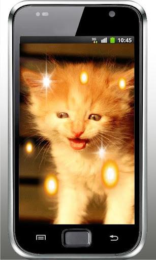Pussy Cat HD live wallpaper