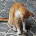 Grass Hopper (and Cat)