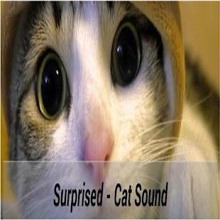 Talk Cat Translator- screenshot thumbnail