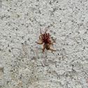 Sow Bug Killer ?