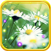 Camomile Summer live wallpaper