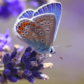 Colourful Butterfly HD