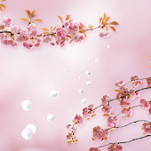 Beautiful sakura livewallpaper