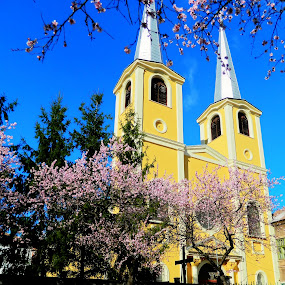 church by Pârlojan Monica - Buildings & Architecture Other Exteriors ( catolic, church, architecture, spring, city,  )