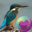 Hummingbirds HD Wallpaper icon