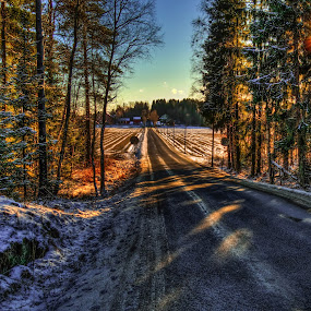 Askim, Norway by IP Maesstro - Landscapes Forests ( hdr, wood, forest, road, maesstro, askim, norway, ip, , path, nature, landscape )