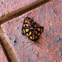 Orange Shoulder Wasp Moth
