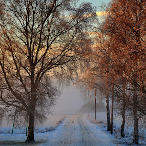 Winter avenue by Jan Myhrehagen - Nature Up Close Trees & Bushes ( winter, hdriphoneographer, hdr, avenue, norway )