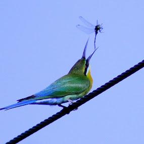 food by Madhu Soodanan - Animals Birds