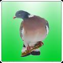 Professional Birds Calls icon