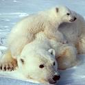 Wild Animals of the Arctic icon