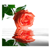 Rose In Water 7